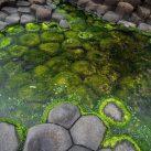 Best Algae Remover for Ponds