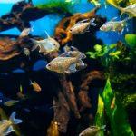Best Bio Filter Media For Freshwater Aquarium