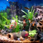 Best Fish to Keep as Pets