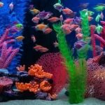 Types of Freshwater Fish for Aquariums