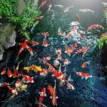 What is the Best Koi Pond Filter System?