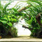 Best Aquarium Plants To Reduce Ammonia
