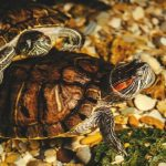 Best Canister Filters for Turtle Tank