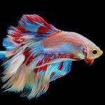 Best Filter for a Betta Fish