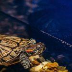 Best Filter Media for Turtle Tank