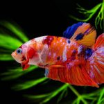 Best Floating Plants for Betta