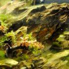 Best Phosphate Remover For Freshwater Aquarium