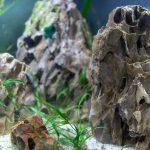 Best Rock for Freshwater Aquarium