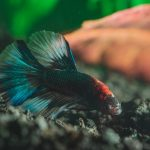 Best Substrate for Bettas