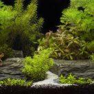 Best White Sand For Freshwater Aquarium