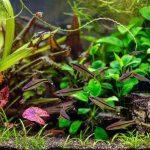 Most Accurate Aquarium Thermometer