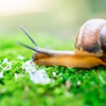 What Does A Snail Eats?