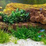 What Fish Eat Algae?